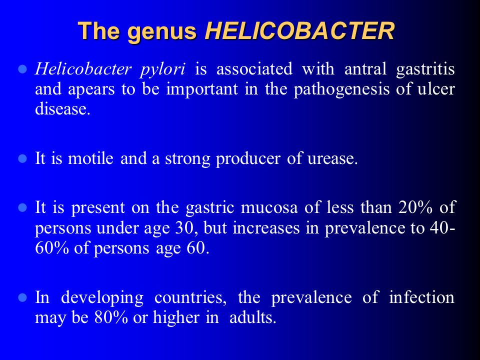 The genus HELICOBACTER Helicobacter pylori is associated with antral gastritis and apears to be important in the pathogenesis of ulcer disease.
