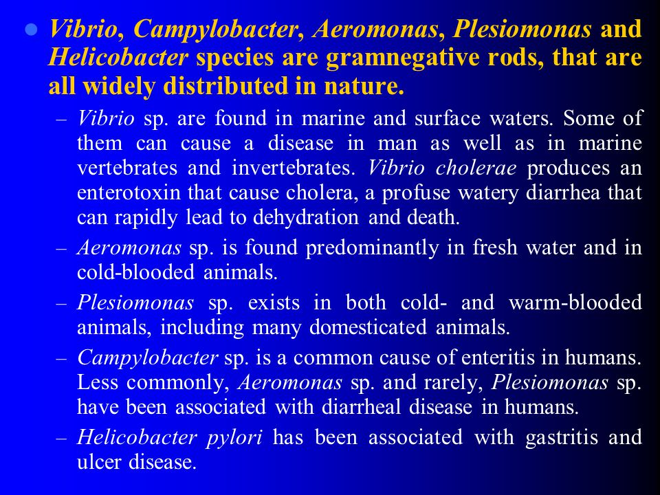 Vibrio, Campylobacter, Aeromonas, Plesiomonas and Helicobacter species are gramnegative rods, that are all widely distributed in nature. – Vibrio sp.