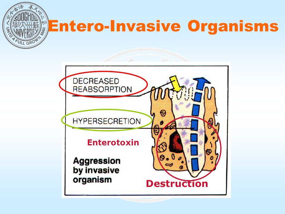 Entero-Invasive Organisms Destruction Enterotoxin