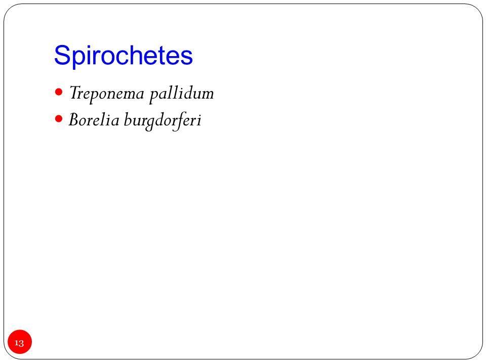 Spirochetes Treponema pallidum Borelia burgdorferi 13