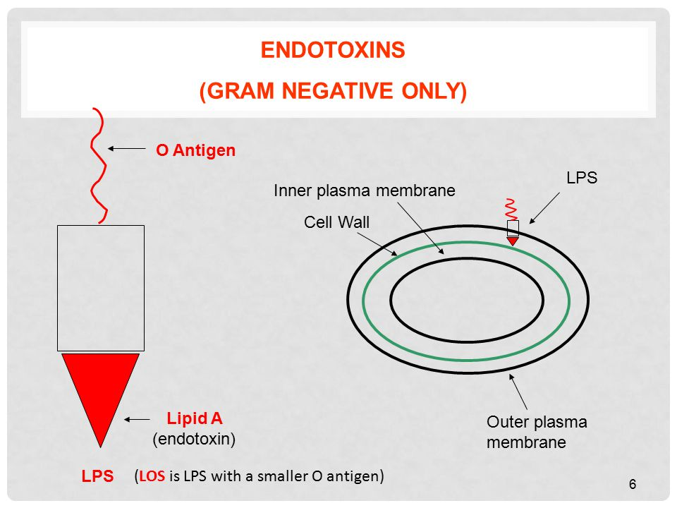 Inner plasma membrane Outer plasma membrane ENDOTOXINS (GRAM NEGATIVE ONLY) Cell Wall LPS O Antigen Lipid A (endotoxin) LPS 6 (LOS is LPS with a smaller O antigen)