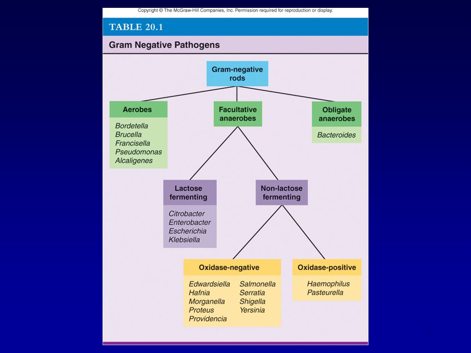 2 Aerobic Gram-Negative Bacilli Pseudomonas – an opportunistic pathogen Brucella & Francisella – zoonotic pathogens Bordetella & Legionella – mainly human pathogens Alcaligenes – opportunistic pathogen