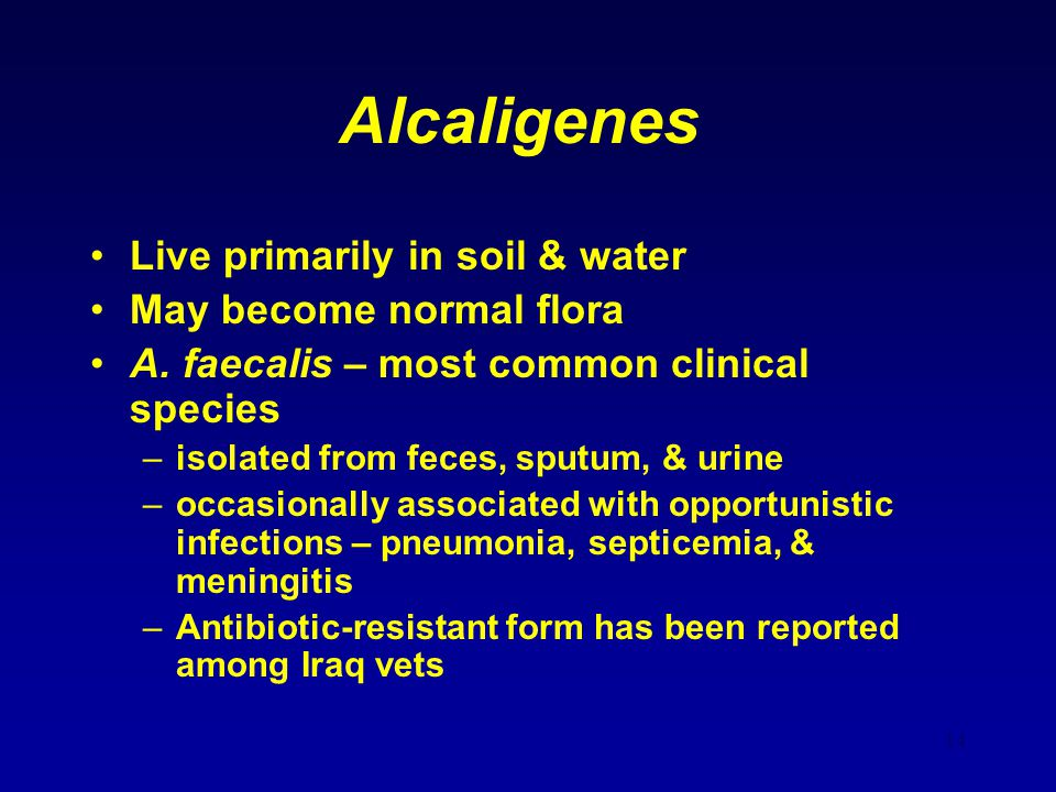 14 Alcaligenes Live primarily in soil & water May become normal flora A. faecalis – most common clinical species –isolated from feces, sputum, & urine