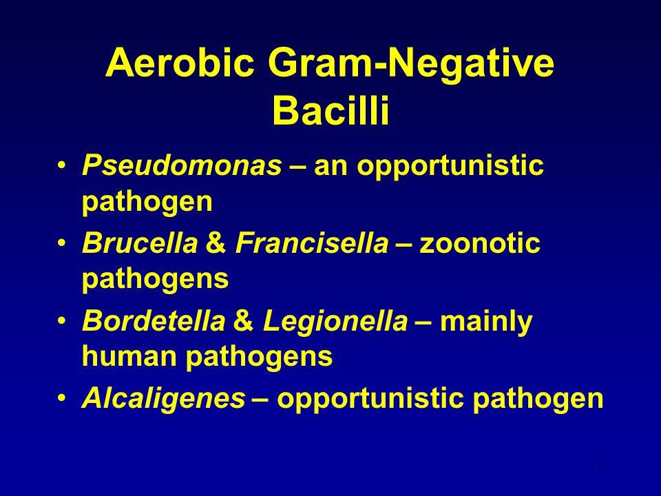 2 Aerobic Gram-Negative Bacilli Pseudomonas – an opportunistic pathogen Brucella & Francisella – zoonotic pathogens Bordetella & Legionella – mainly h