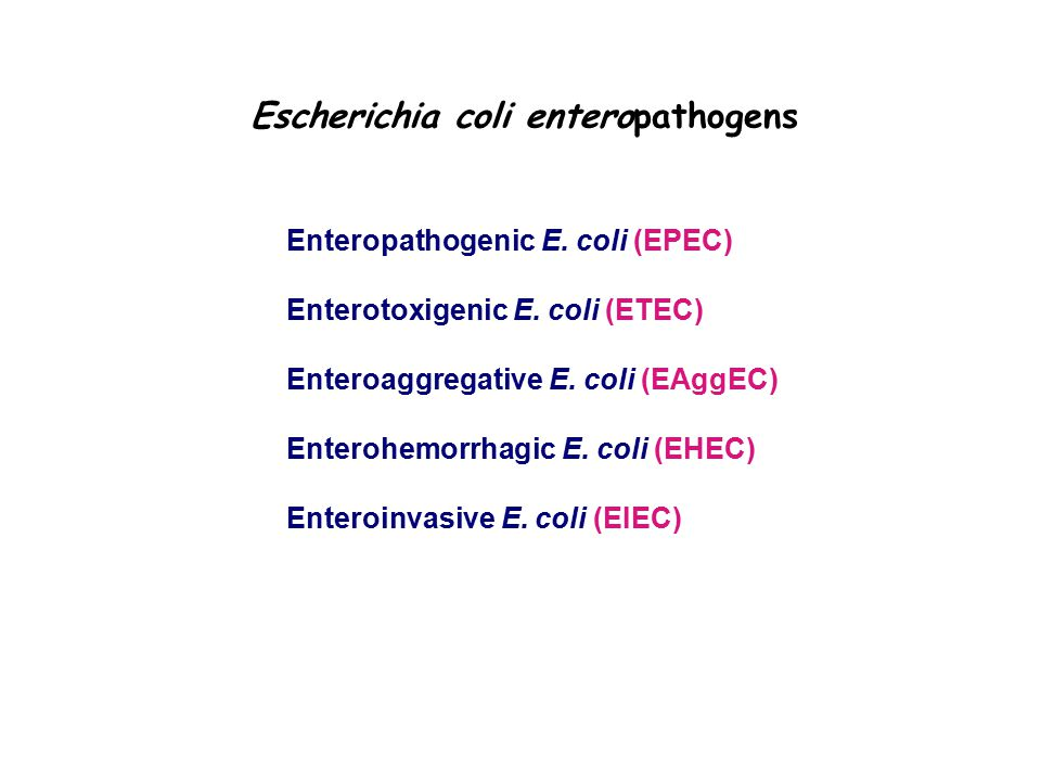 Escherichia coli enteropathogens Enteropathogenic E.