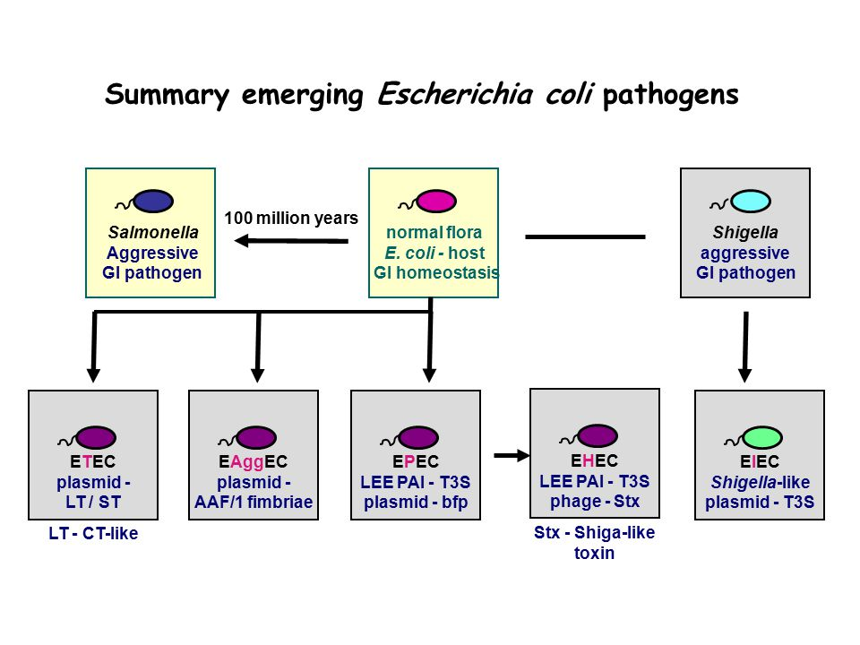 Summary emerging Escherichia coli pathogens normal flora E.