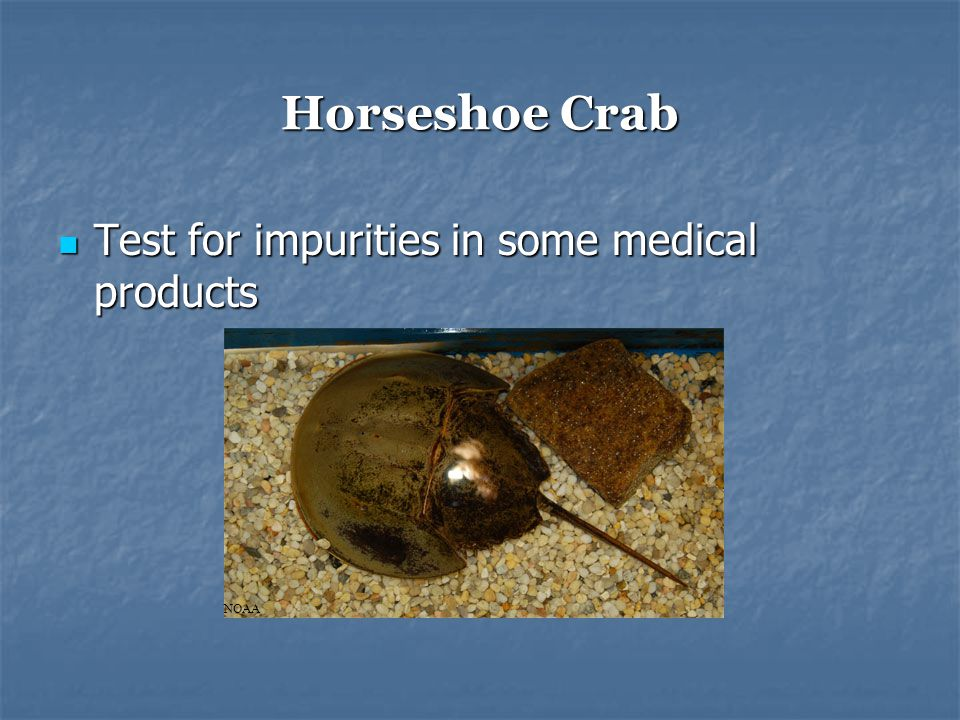 Horseshoe Crab Test for impurities in some medical products Test for impurities in some medical products NOAA