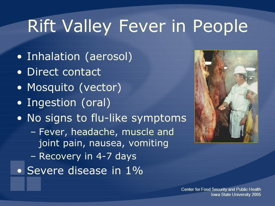 Center for Food Security and Public Health Iowa State University 2005 Rift Valley Fever in People Inhalation (aerosol) Direct contact Mosquito (vector) Ingestion (oral) No signs to flu-like symptoms –Fever, headache, muscle and joint pain, nausea, vomiting –Recovery in 4-7 days Severe disease in 1%