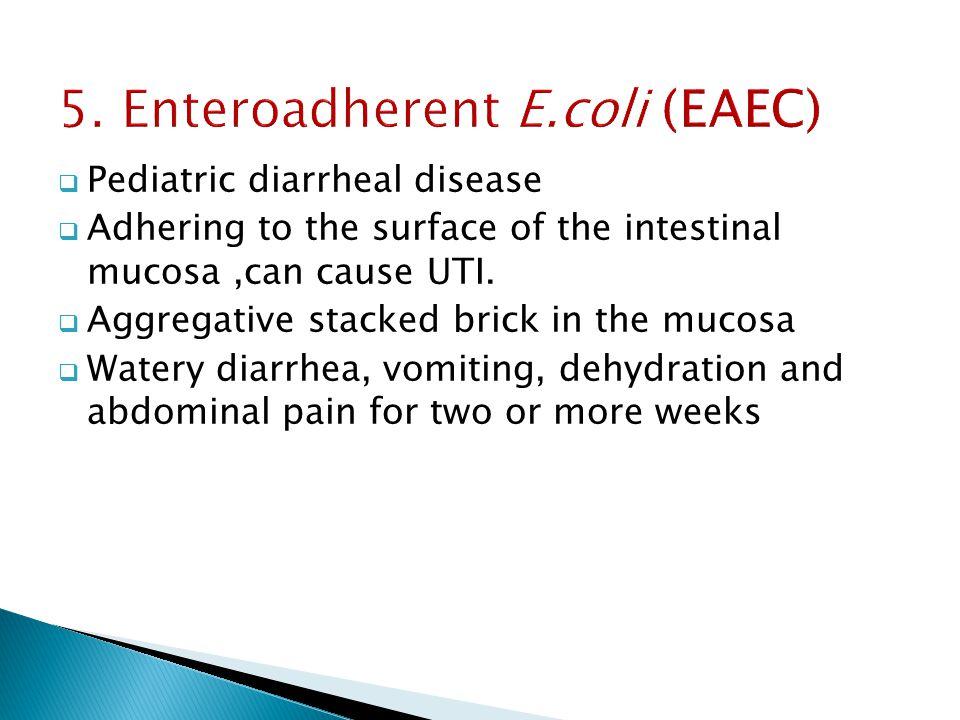 5. Enteroadherent E.coli (EAEC)  Pediatric diarrheal disease  Adhering to the surface of the intestinal mucosa,can cause UTI.  Aggregative stacked