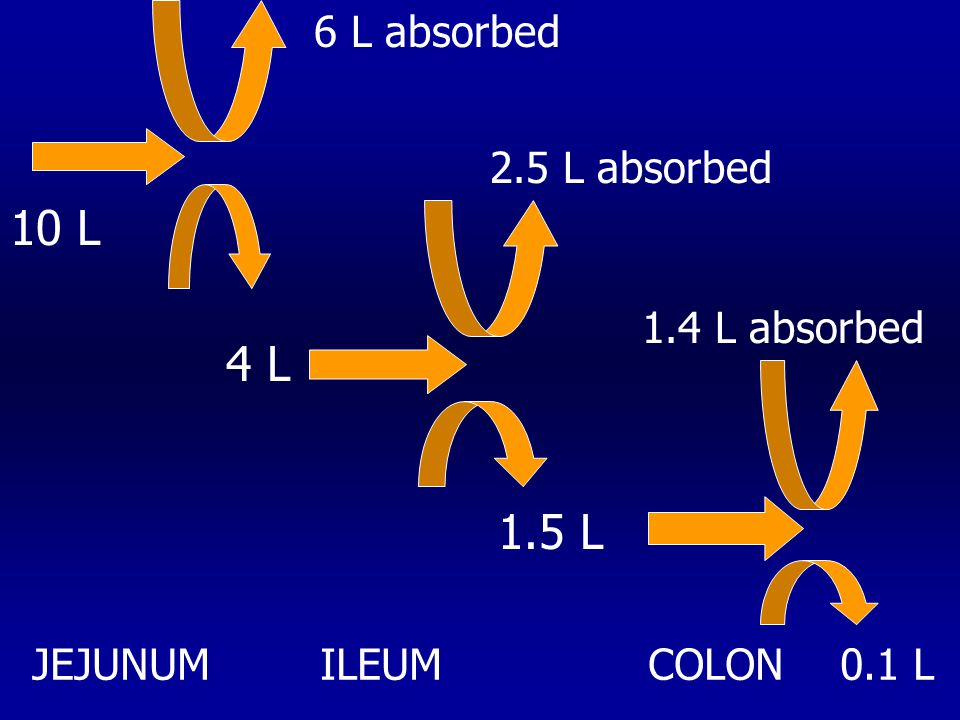 10 L 6 L absorbed 2.5 L absorbed JEJUNUMILEUM COLON 4 L 1.5 L 1.4 L absorbed 0.1 L