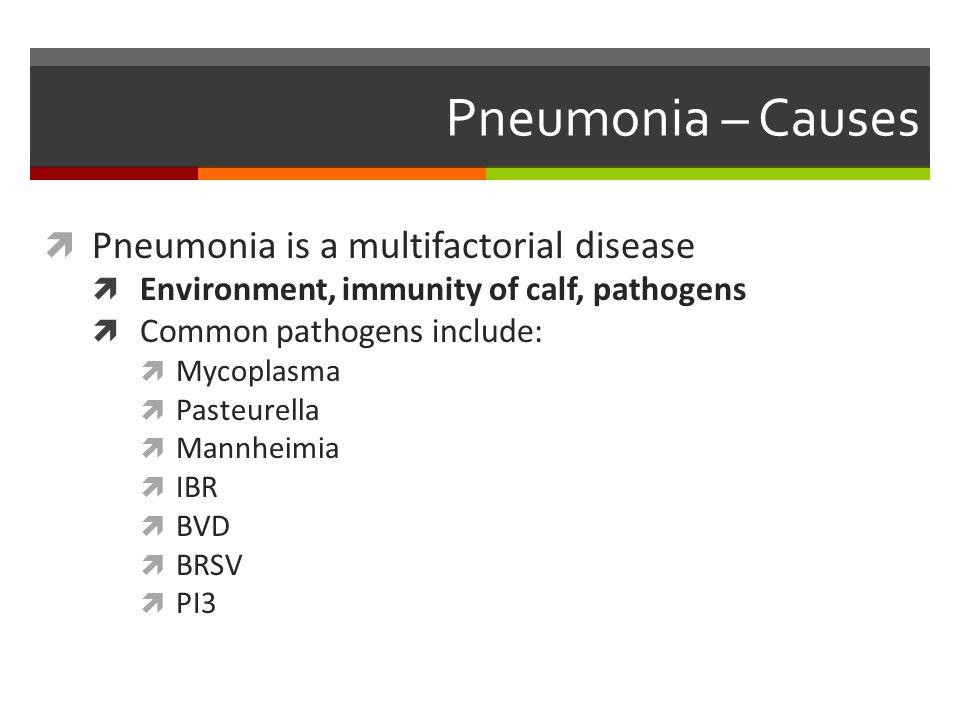  Pneumonia is a multifactorial disease  Environment, immunity of calf, pathogens  Common pathogens include:  Mycoplasma  Pasteurella  Mannheimia  IBR  BVD  BRSV  PI3 Pneumonia – Causes