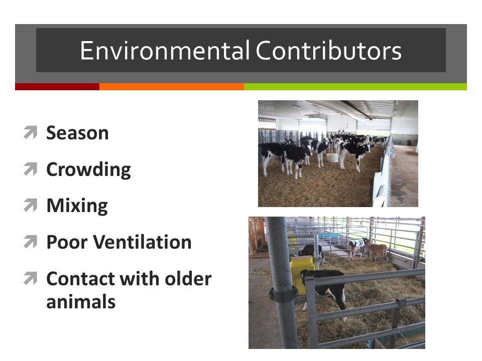 Environmental Contributors  Season  Crowding  Mixing  Poor Ventilation  Contact with older animals