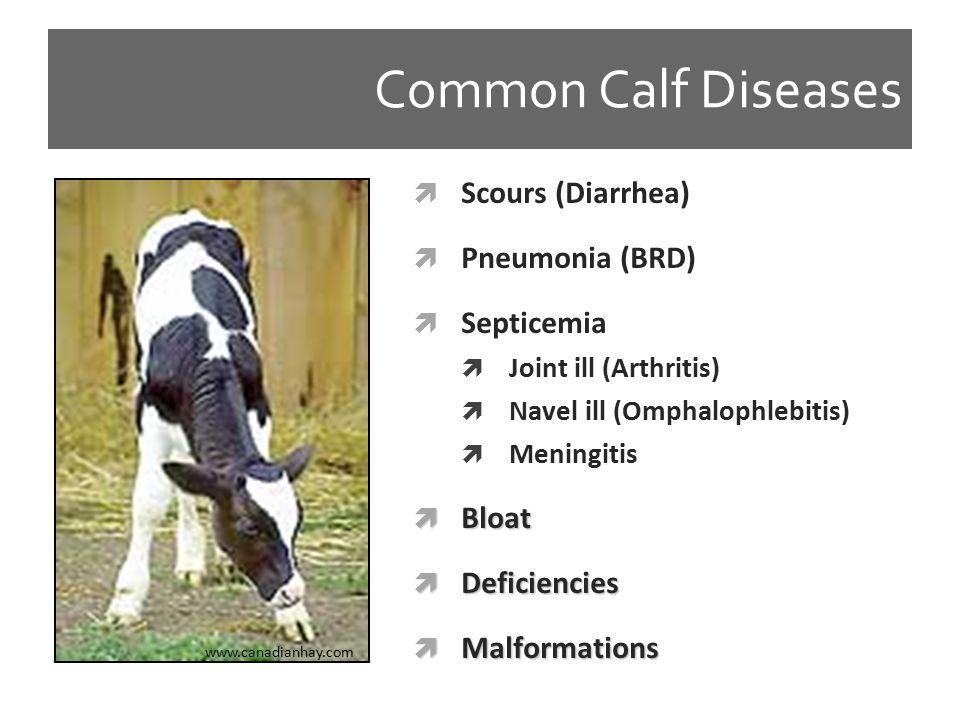 Studies on the Incidence of Calf Disease Waltner- Toews Ontario 1986 Curtis New York 1988 Sivula Minnesota 1995 Virtala New York 1996 Windeyer Ontario 2010 Overall Averages Diarrhea 20.515.1 28.823 20 BRD 15.47.47.625.622 15 Other n/a 7.71.333.27.5 5 TOTAL 3530.22487.643 40