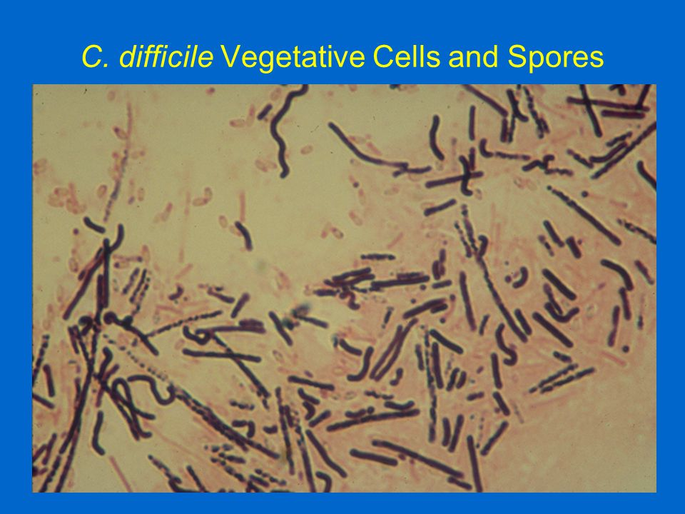 C. difficile Vegetative Cells and Spores