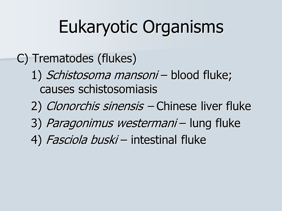 Eukaryotic Organisms C) Trematodes (flukes) 1) Schistosoma mansoni – blood fluke; causes schistosomiasis 2) Clonorchis sinensis – Chinese liver fluke 3) Paragonimus westermani – lung fluke 4) Fasciola buski – intestinal fluke