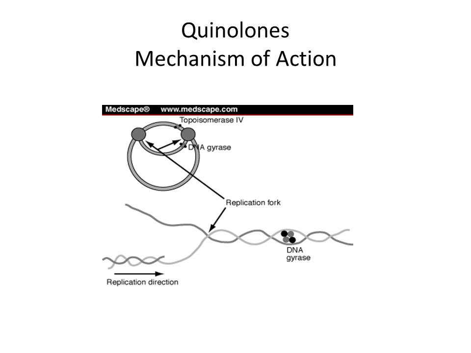 Fluoroquinolones Spectrum of Activity Gram (–) bacilli – Enterobacteriaceae (E.