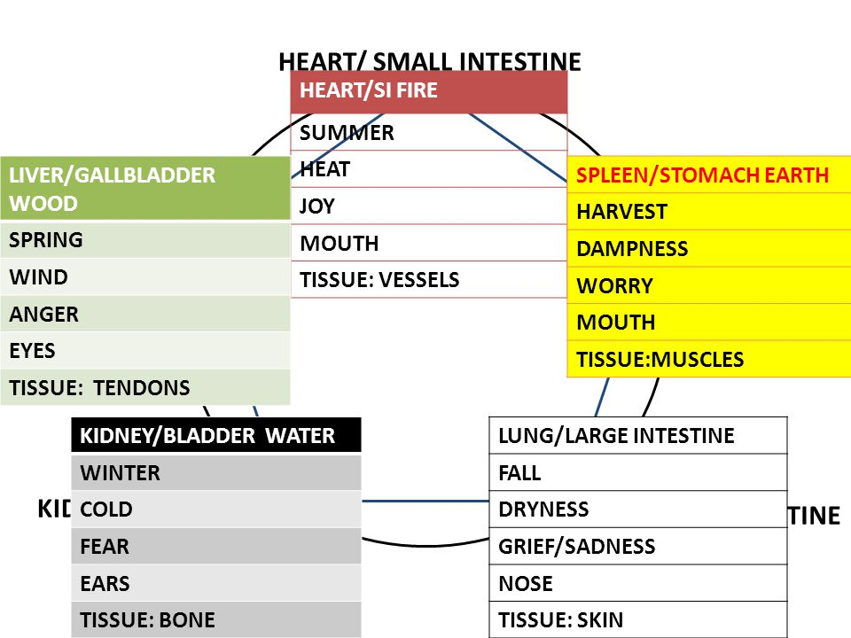 HEART/ SMALL INTESTINE LIVER/GALLBLADDER SPLEEN/STOMACH KIDNEY/BLADDER LUNG/LARGE INTESTINE HEART/SI FIRE SUMMER HEAT JOY MOUTH TISSUE: VESSELS LIVER/GALLBLADDER WOOD SPRING WIND ANGER EYES TISSUE: TENDONS SPLEEN/STOMACH EARTH HARVEST DAMPNESS WORRY MOUTH TISSUE:MUSCLES KIDNEY/BLADDER WATER WINTER COLD FEAR EARS TISSUE: BONE LUNG/LARGE INTESTINE FALL DRYNESS GRIEF/SADNESS NOSE TISSUE: SKIN