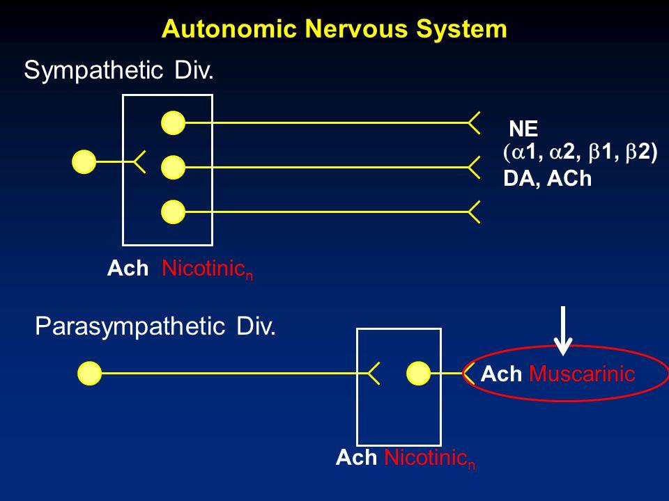 Sympathetic Div. Parasympathetic Div. Ach Nicotinic n Ach Muscarinic  1,  2,  1,  2) DA, ACh NE Autonomic Nervous System