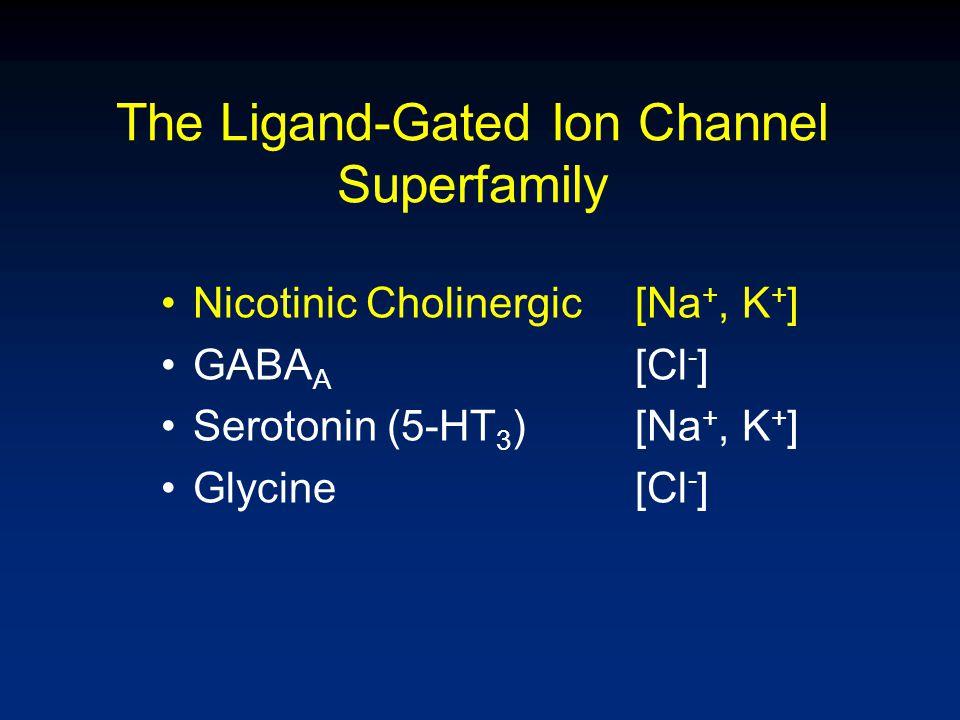 The Ligand-Gated Ion Channel Superfamily Nicotinic Cholinergic[Na +, K + ] GABA A [Cl - ] Serotonin (5-HT 3 )[Na +, K + ] Glycine[Cl - ]