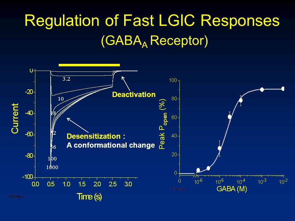 Regulation of Fast LGIC Responses (GABA A Receptor) Deactivation Desensitization : A conformational change 3.2 10 18 32 56 100 1000