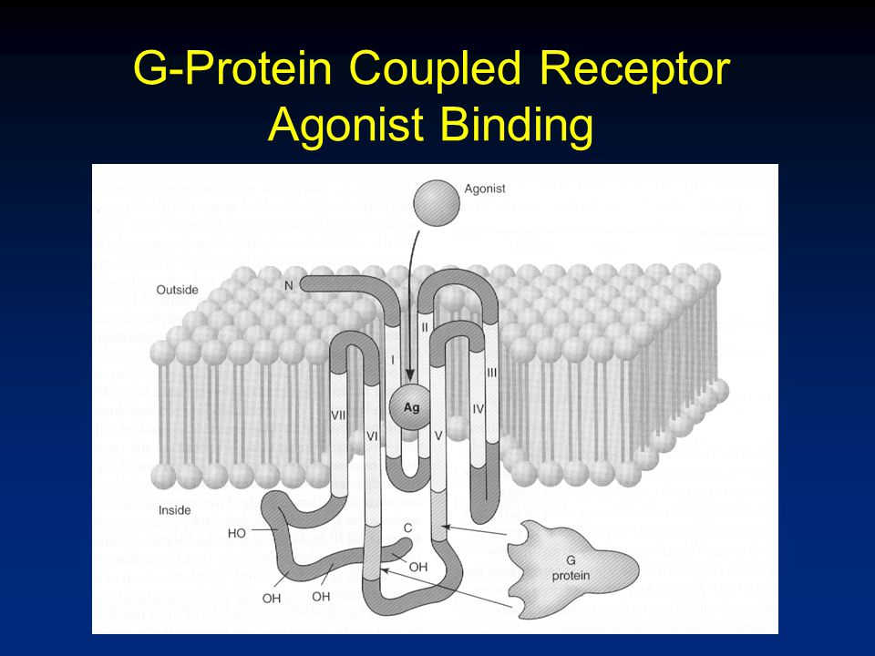 G-Protein Coupled Receptor Agonist Binding