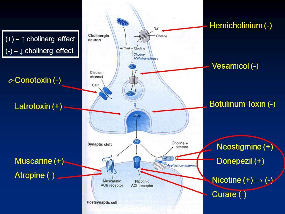 Hemicholinium (-) Vesamicol (-) Latrotoxin (+) Botulinum Toxin (-) Neostigmine (+) Donepezil (+) Nicotine (+) → (-) Curare (-) Muscarine (+) Atropine
