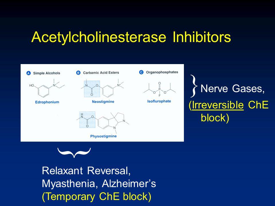 Acetylcholinesterase Inhibitors } } Nerve Gases, (Irreversible ChE block) Relaxant Reversal, Myasthenia, Alzheimer's (Temporary ChE block)