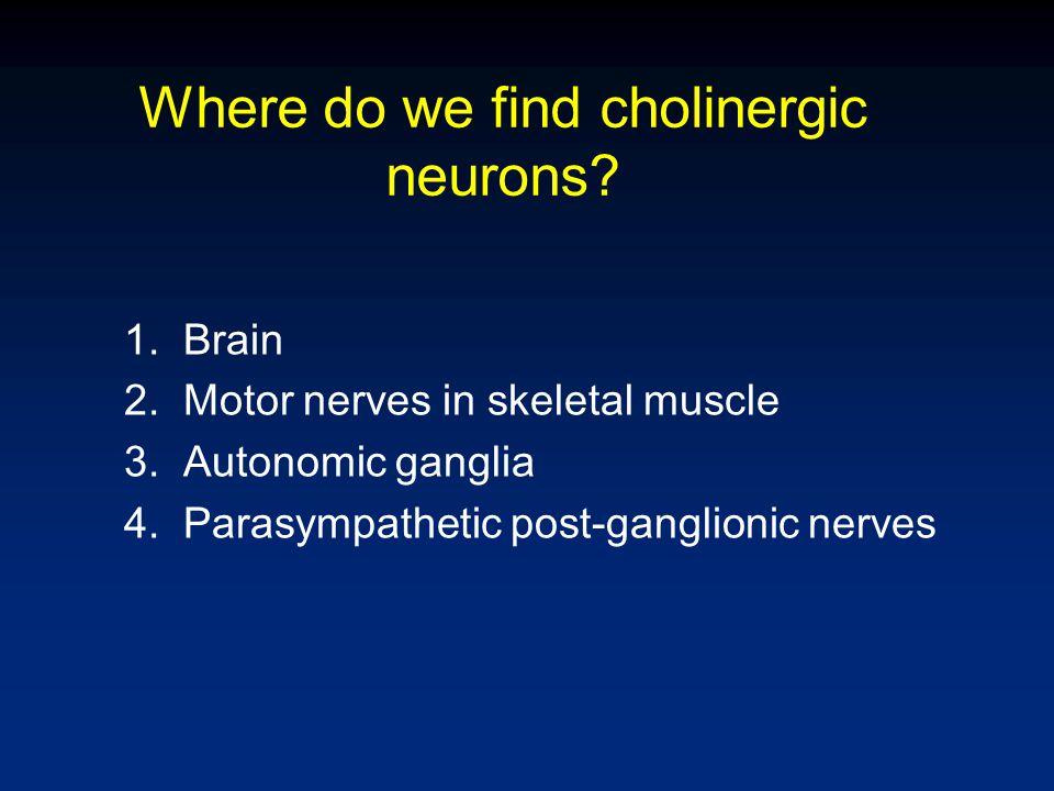 Where do we find cholinergic neurons? 1.Brain 2.Motor nerves in skeletal muscle 3.Autonomic ganglia 4.Parasympathetic post-ganglionic nerves