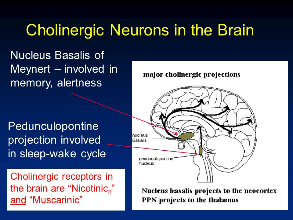 Alzheimer Disease: Loss of Cholinergic neurons Degeneration of Nucleus Basalis of Meynert Loss of neurons in pedunculopontine projection Drugs for ALZHEIMER'S increase synaptic Ach of remaining neurons.