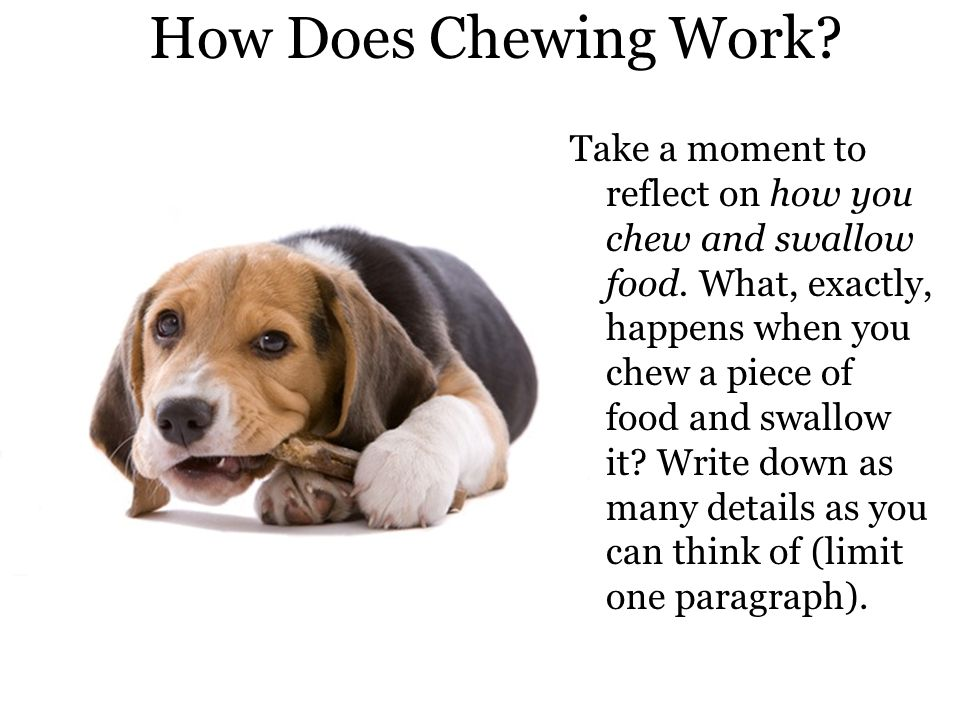 Chewing Chewing involves: Grinding and cutting by the teeth Chemical breakdown by salivary enzymes, such as amylase, which breaks starch.