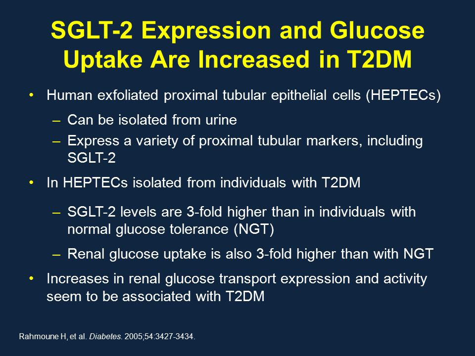 SGLT-2 Expression and Glucose Uptake Are Increased in T2DM Human exfoliated proximal tubular epithelial cells (HEPTECs) –Can be isolated from urine –Express a variety of proximal tubular markers, including SGLT-2 In HEPTECs isolated from individuals with T2DM –SGLT-2 levels are 3-fold higher than in individuals with normal glucose tolerance (NGT) –Renal glucose uptake is also 3-fold higher than with NGT Increases in renal glucose transport expression and activity seem to be associated with T2DM Rahmoune H, et al.