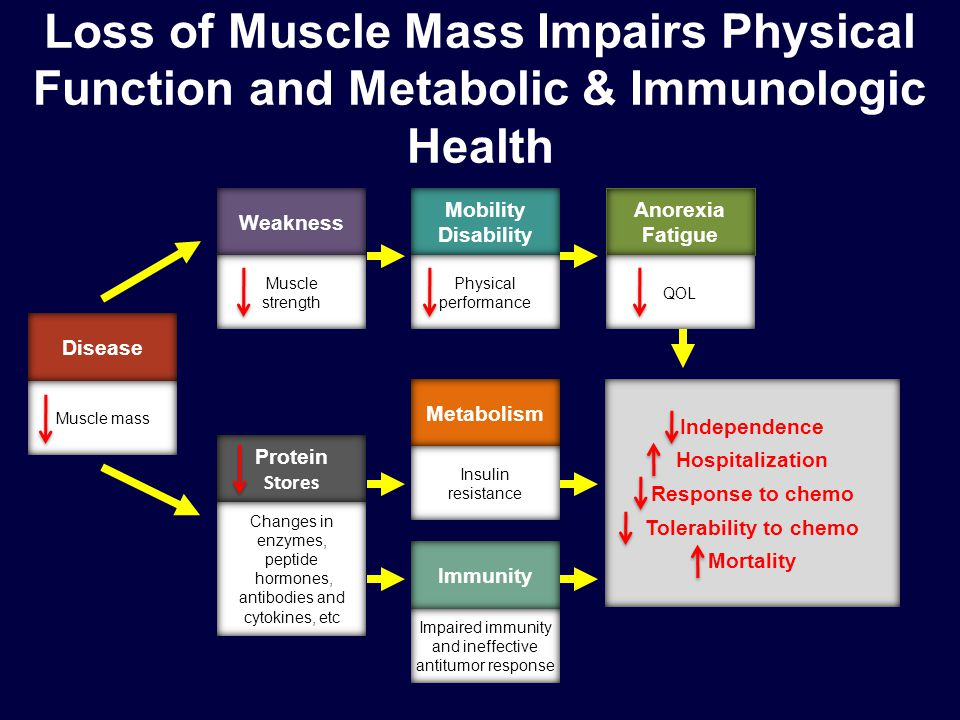 Loss of Muscle Mass Impairs Physical Function and Metabolic & Immunologic Health Protein Stores Changes in enzymes, peptide hormones, antibodies and cytokines, etc Immunity Impaired immunity and ineffective antitumor response Metabolism Insulin resistance Mobility Disability Physical performance Anorexia Fatigue QOL Weakness Muscle strength Disease Muscle mass Independence Hospitalization Response to chemo Tolerability to chemo Mortality