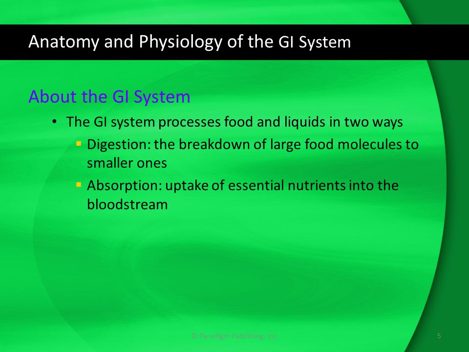 Anatomy and Physiology of the GI System About the GI System The GI system processes food and liquids in two ways  Digestion: the breakdown of large food molecules to smaller ones  Absorption: uptake of essential nutrients into the bloodstream 5© Paradigm Publishing, Inc.