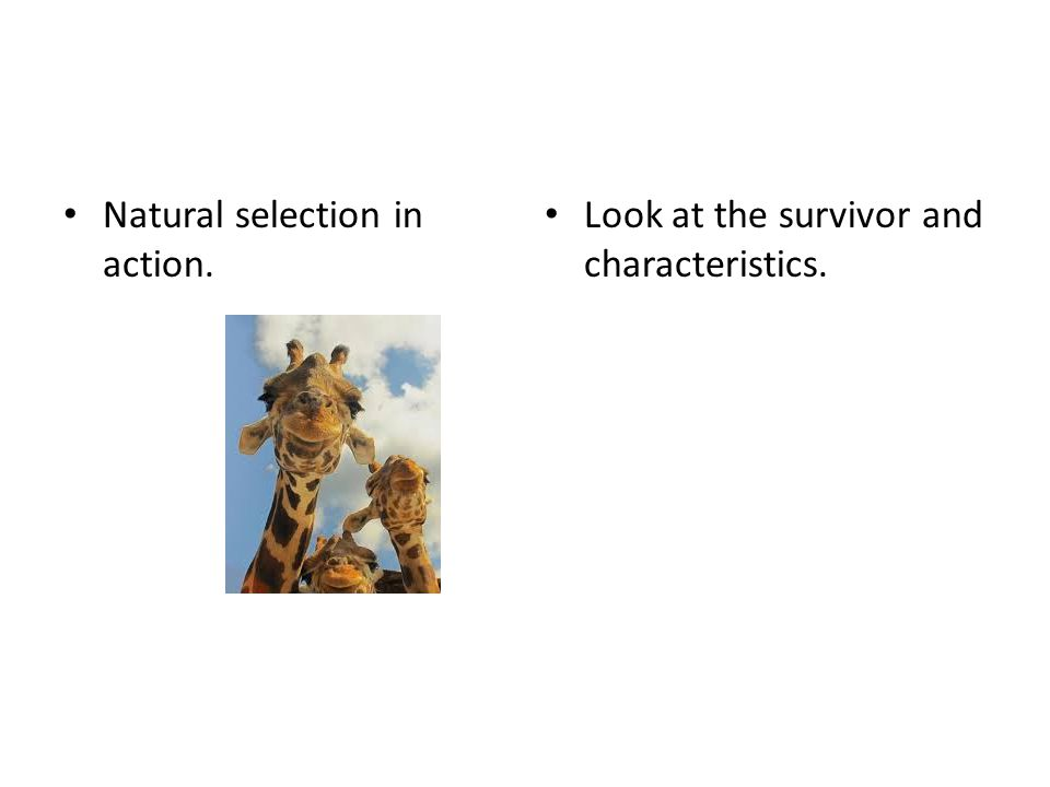 Natural selection in action. Look at the survivor and characteristics.