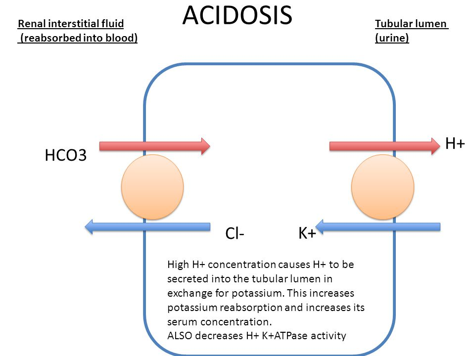 ACIDOSIS Renal interstitial fluid (reabsorbed into blood) Tubular lumen (urine) H+ K+ HCO3 Cl- High H+ concentration causes H+ to be secreted into the