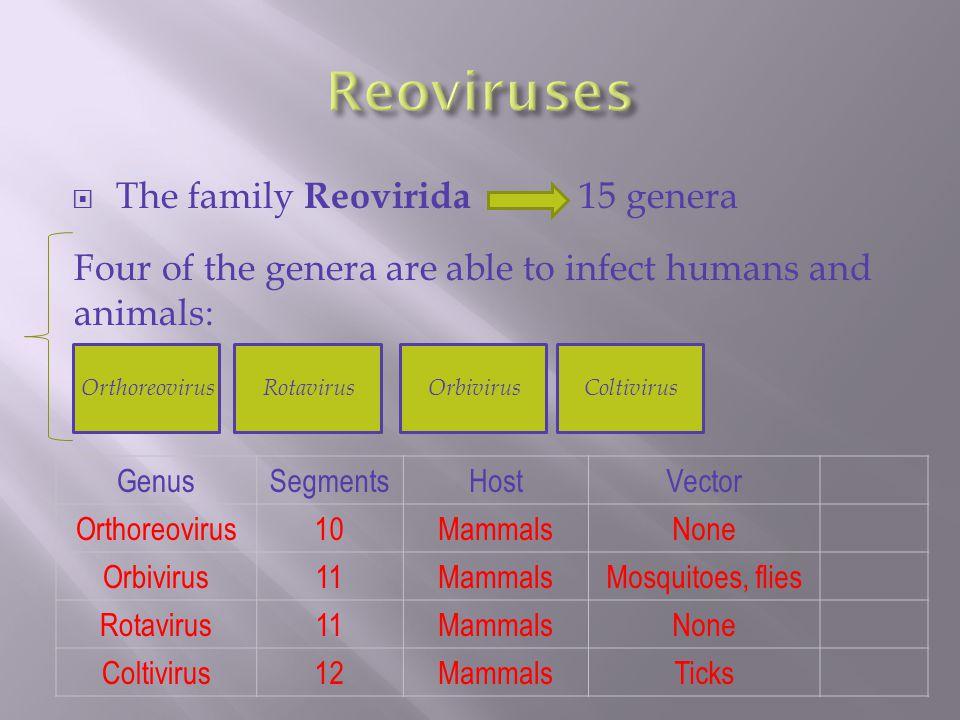  The family Reovirida 15 genera Four of the genera are able to infect humans and animals: OrthoreovirusRotavirus Orbivirus Coltivirus GenusSegmentsHostVector Orthoreovirus10MammalsNone Orbivirus11MammalsMosquitoes, flies Rotavirus11MammalsNone Coltivirus12MammalsTicks