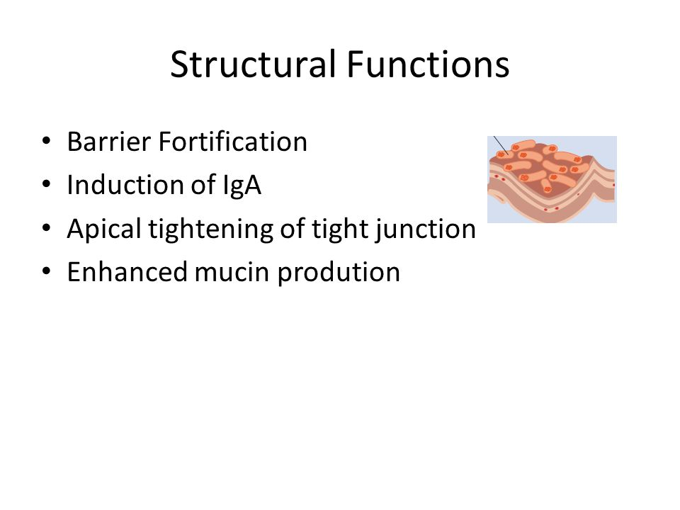 Structural Functions Barrier Fortification Induction of IgA Apical tightening of tight junction Enhanced mucin prodution