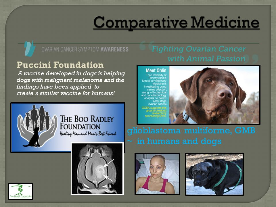 Puccini Foundation A vaccine developed in dogs is helping dogs with malignant melanoma and the findings have been applied to create a similar vaccine