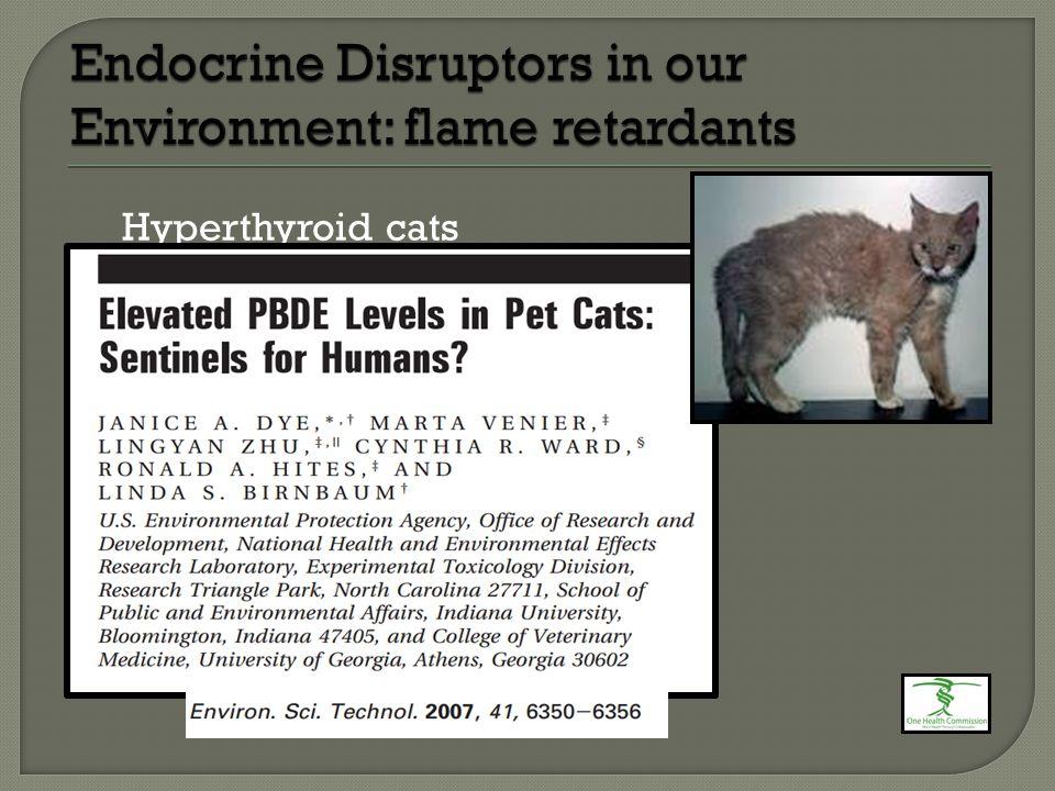 Hyperthyroid cats
