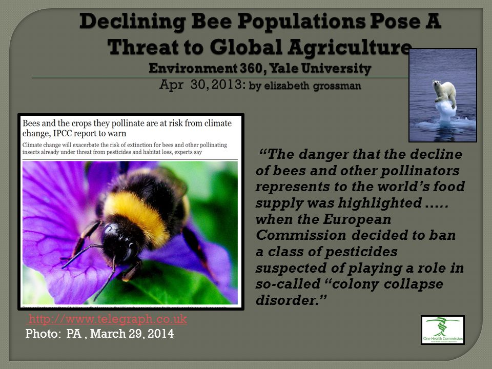 """""""The danger that the decline of bees and other pollinators represents to the world's food supply was highlighted ….. when the European Commission deci"""