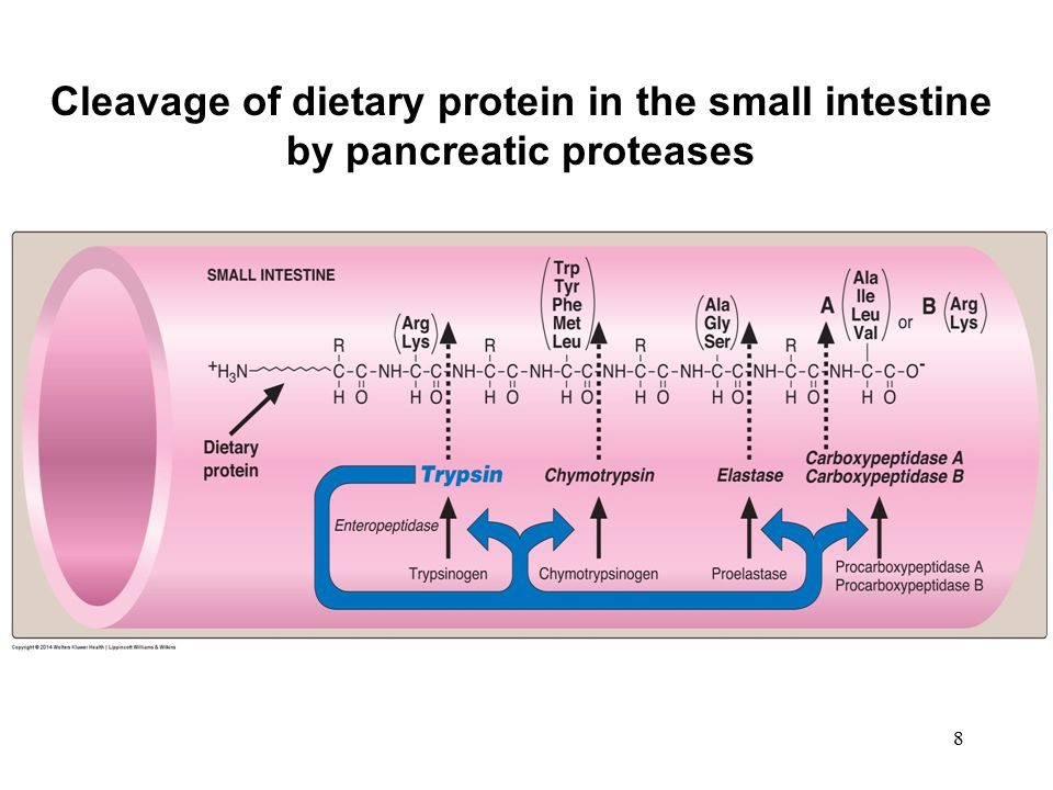 9 Hormonal control of nutrient digestion in the small intestine: the role of cholecystokinin and secretin and proteins