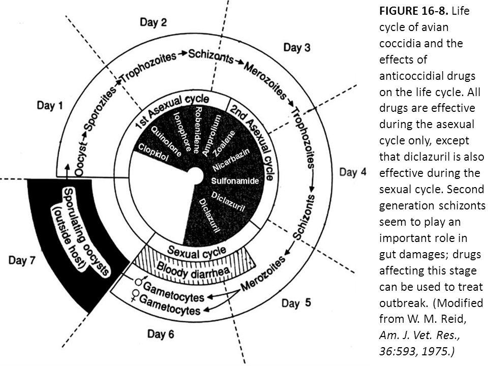 4.Pharmacokinetics a. Absorption.