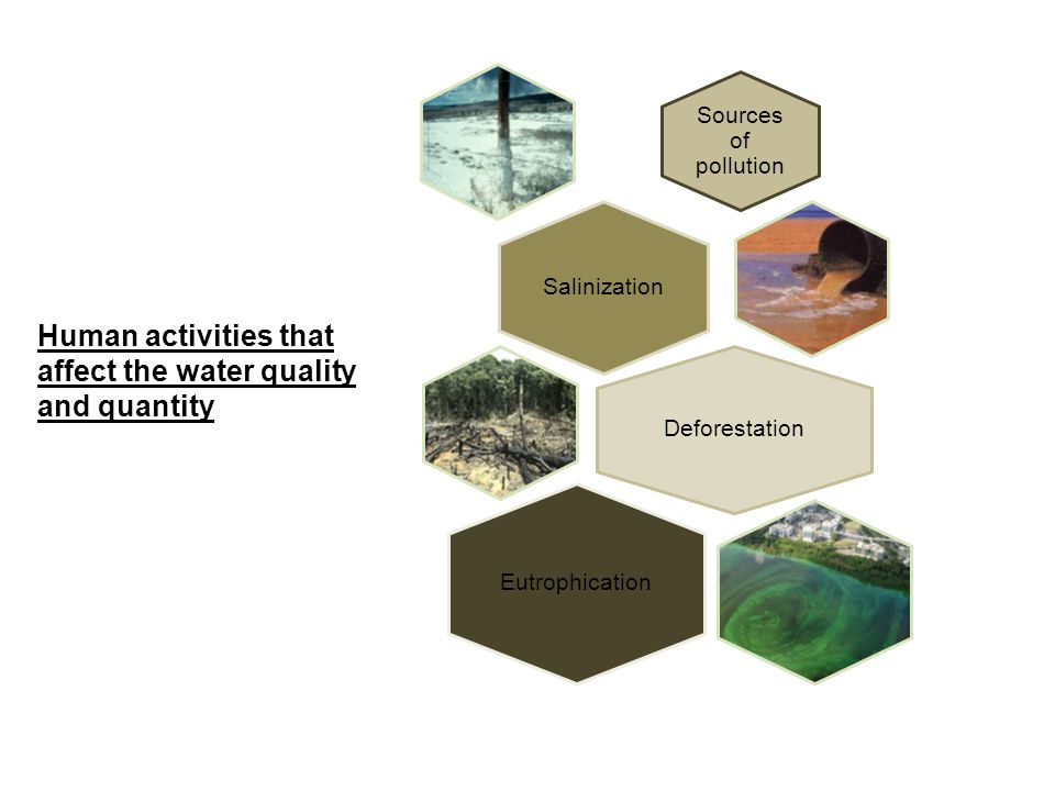 Sources of pollution Salinization Deforestation Eutrophication Human activities that affect the water quality and quantity