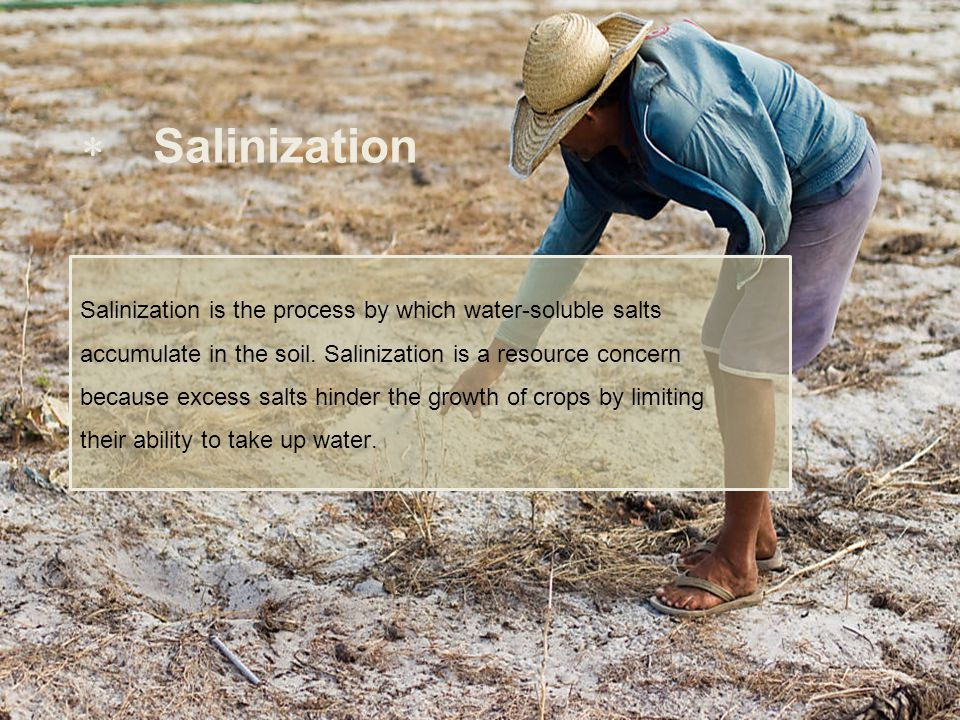  Salinization Salinization is the process by which water-soluble salts accumulate in the soil. Salinization is a resource concern because excess salt