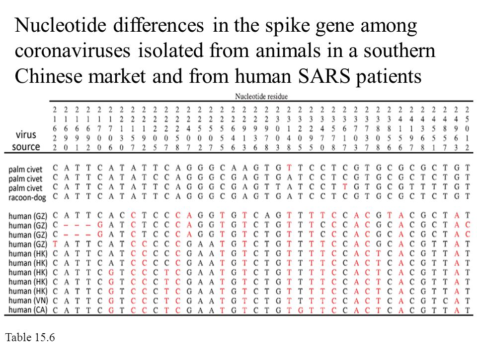 Nucleotide differences in the spike gene among coronaviruses isolated from animals in a southern Chinese market and from human SARS patients Table 15.6