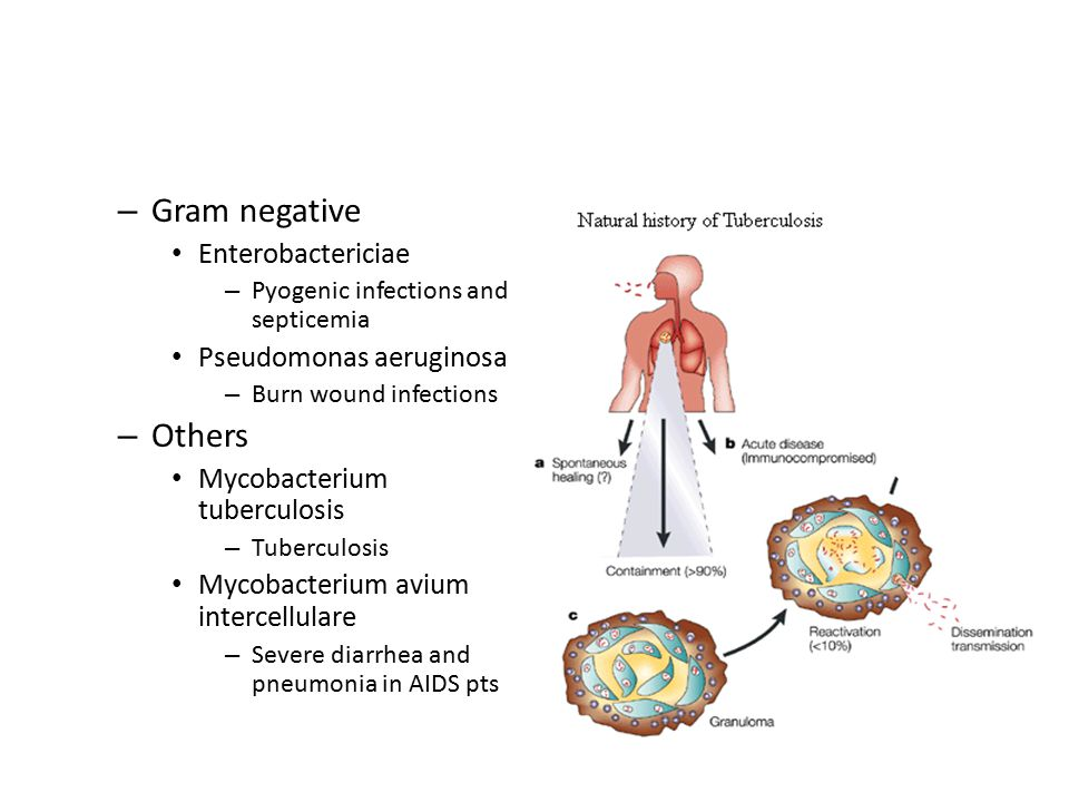 – Gram negative Enterobactericiae – Pyogenic infections and septicemia Pseudomonas aeruginosa – Burn wound infections – Others Mycobacterium tuberculo