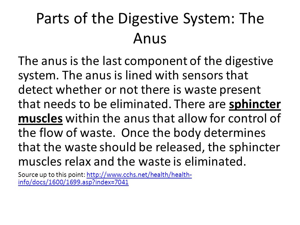Parts of the Digestive System: The Anus The anus is the last component of the digestive system. The anus is lined with sensors that detect whether or