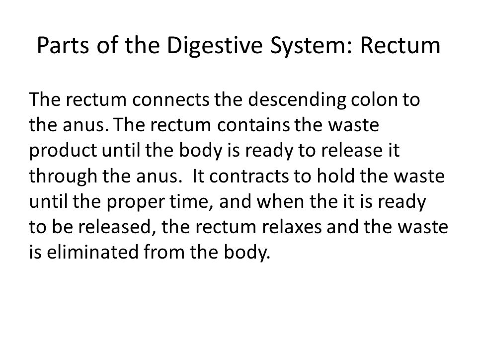 Parts of the Digestive System: The Anus The anus is the last component of the digestive system.