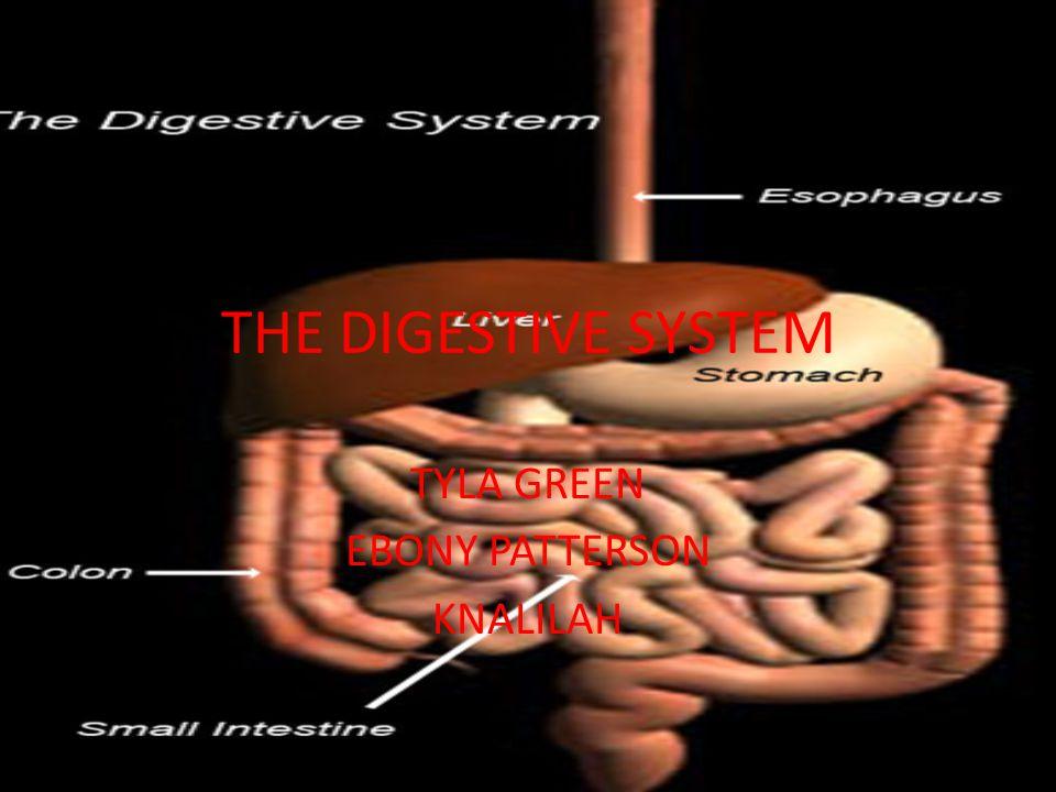 THE DIGESTIVE SYSTEM TYLA GREEN EBONY PATTERSON KNALILAH