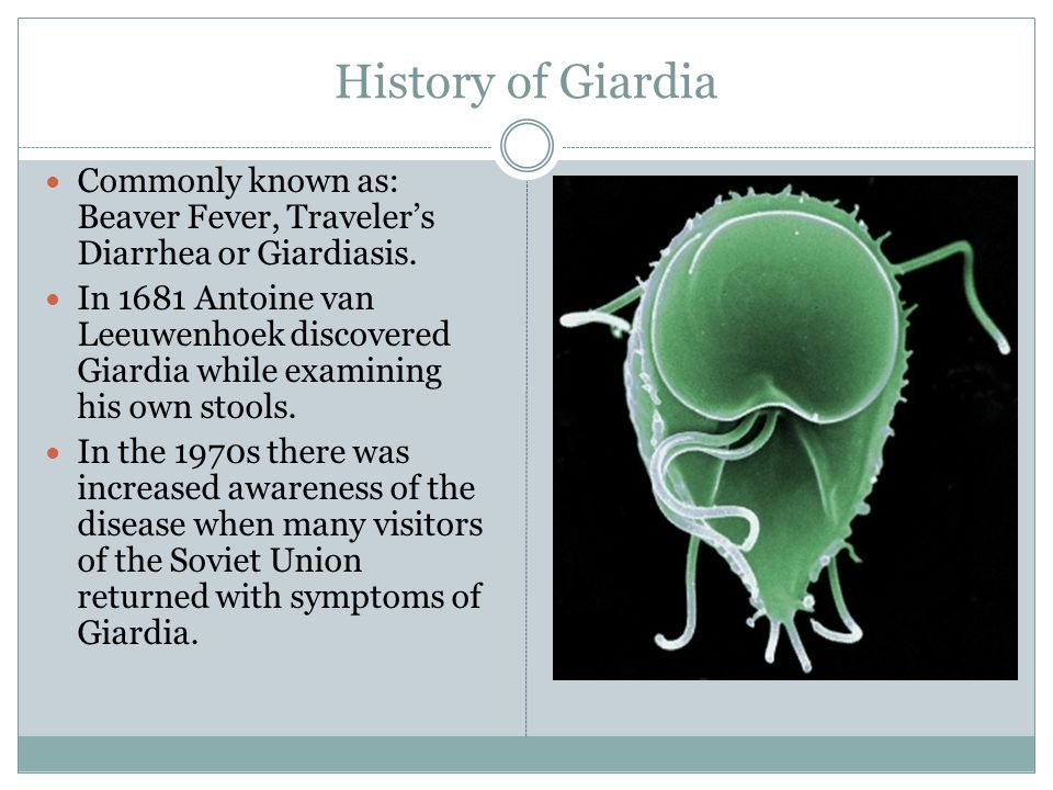 Why is it important to study Giardia.